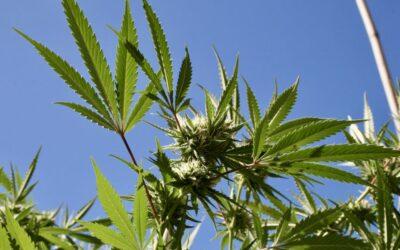State And Local Marijuana Regulators Demand Congress Prioritize Federal Legalization Bill