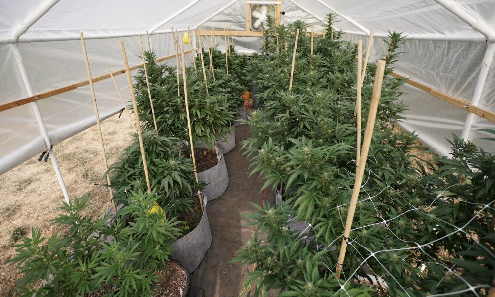 Aurora Cannabis strikes deal to sell cultivation facilities, document suggests