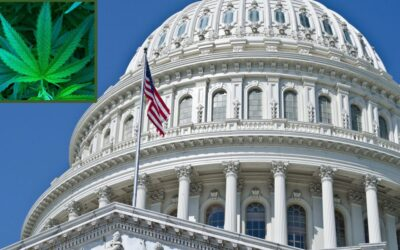 Congress takes up historic bill to decriminalize cannabis