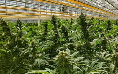 Cannabis firm Aphria grows Q2 revenue, reports CA$120.6M net loss