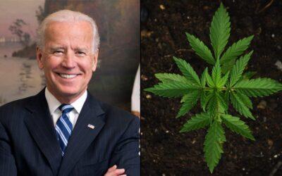 Biden Taps Marijuana Legalization Supporter To Lead Democratic National Committee