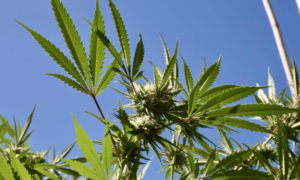 Federal Court Rejects Ohio Marijuana Activists' Challenge Over 2020 Decriminalization Initiatives