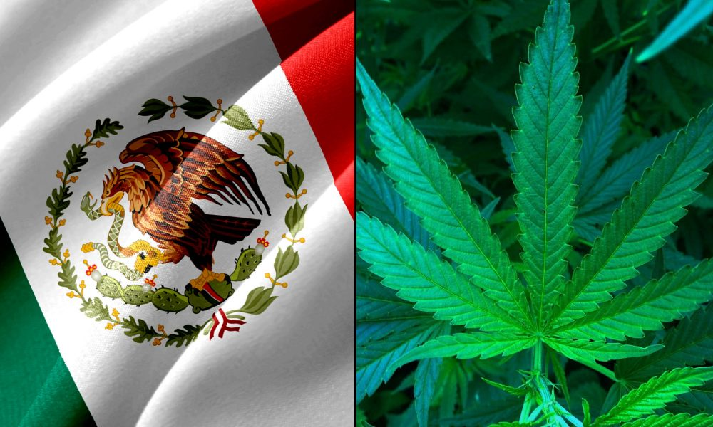 Top Mexican Senator Says Lawmakers Will Again Take Up Marijuana Legalization In New Session