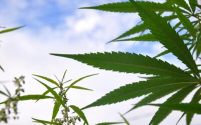 New York Marijuana Regulatory Board Is Officially Completed With Governor's Final Appointments